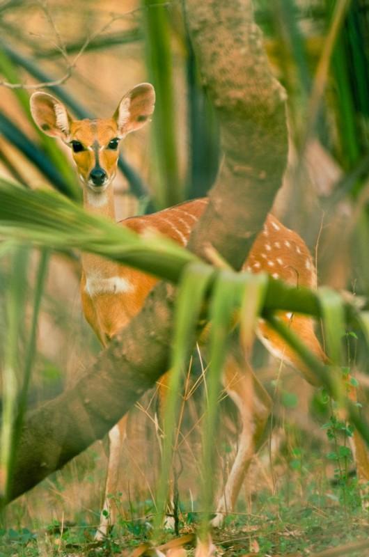 Национальный парк Ниоколо-Коба, Сенегал. Под угрозой с 2007 года.