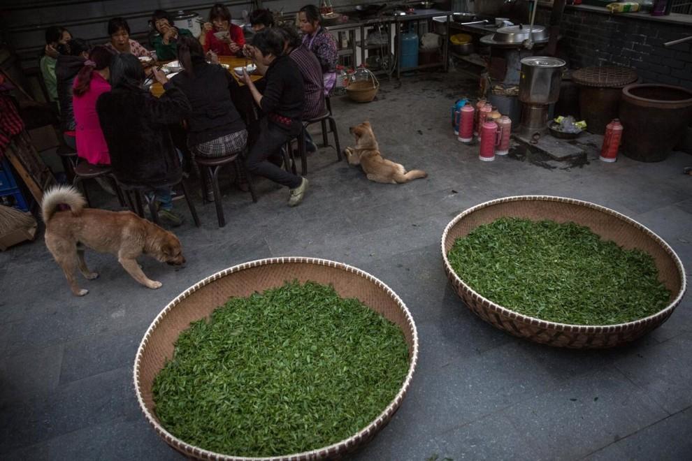 Посетители выставки Tea Expo пробуют разные сорта чая в городе Цзуньи в провинции Гуйчжоу.