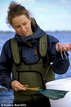 «На самом деле нет ничего нового в поедании медуз, — рассказала гастрофизик Мие Педерсен. — Это стар