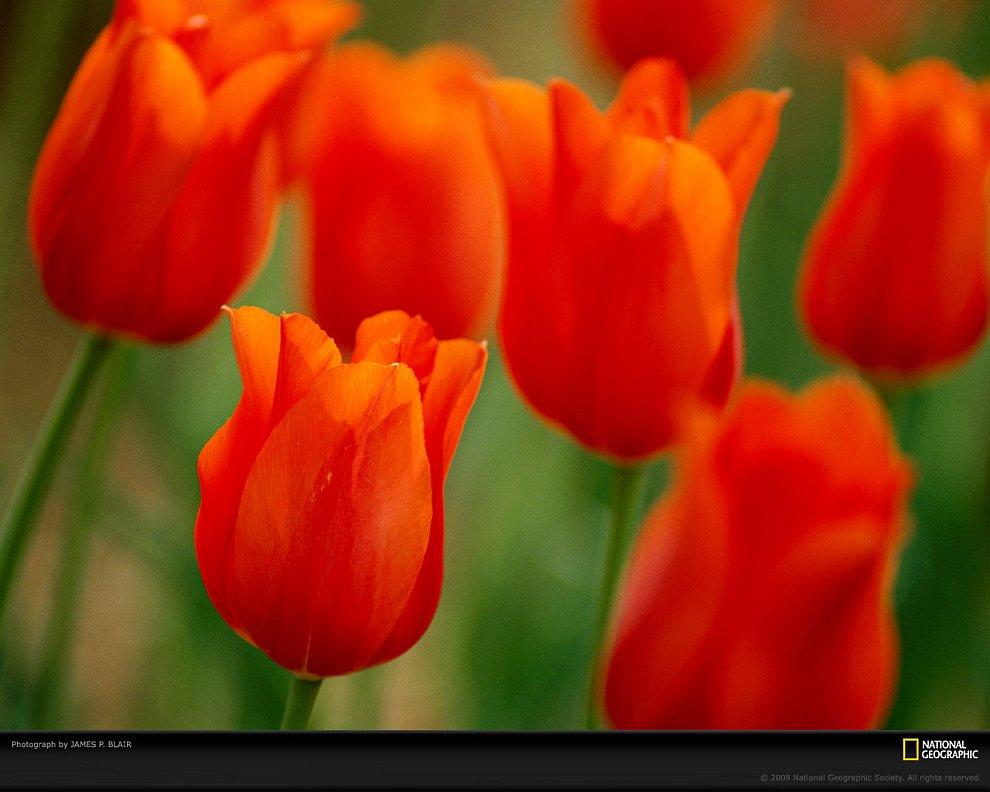 Оранжевый фейерверк (Фото Dan Anderson):