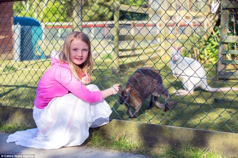 Один любящий отец из Уэльса сделал шаг дальше, чем просто отвезти своих детей в зоопарк, — он и его