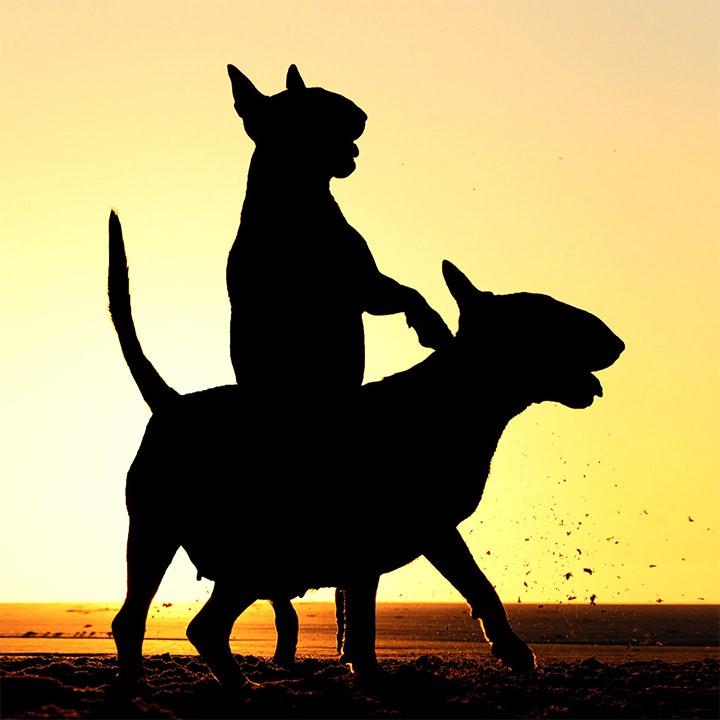 Одинокий пастух. Элис ван Кемпен, Нидерланды. Самовлюбленная лошадь. Нандо Хамсен, Нидерланды.