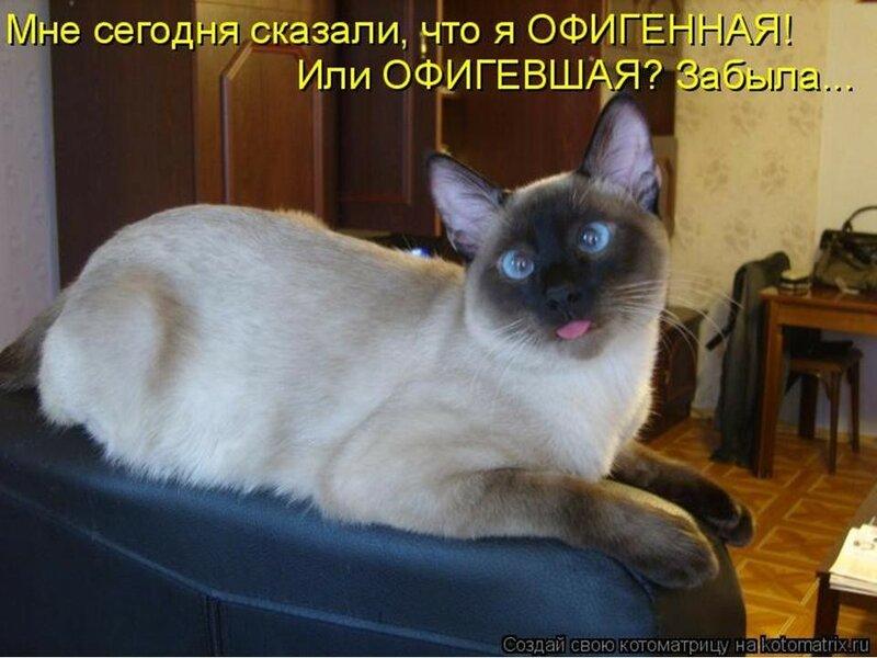 Сиамская кошка.jpeg