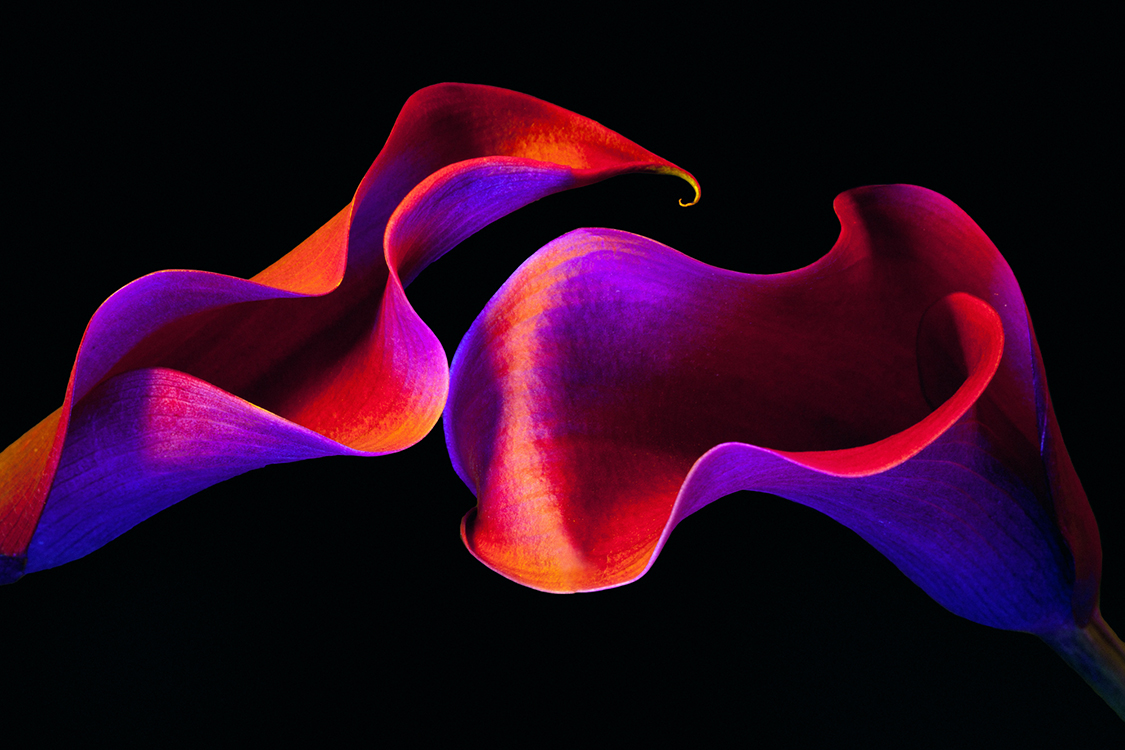 Psychedelic Photographs of Flowers (10 pics)