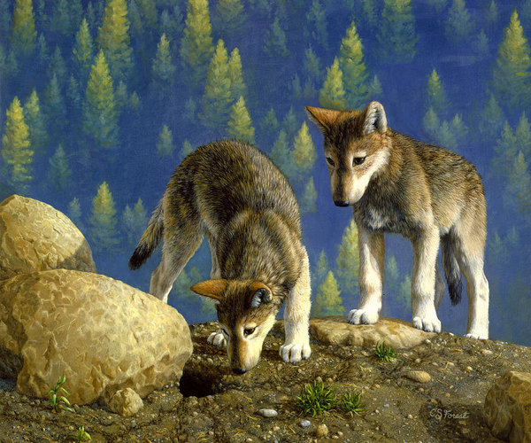 wolf-pups-anybody-home-crista-forest.jpg