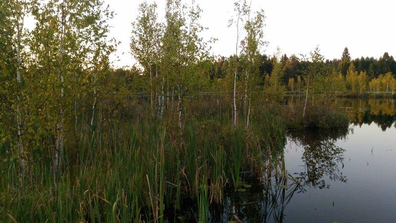 Прибрежное болотце, Пчелинское озеро