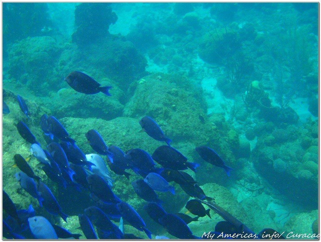 Подводный мир Кюрасао.