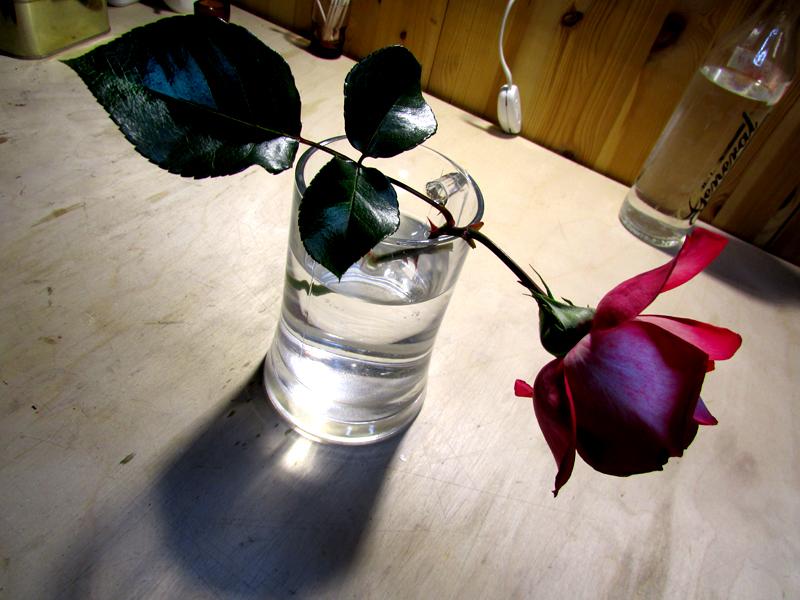 последняя роза сезона