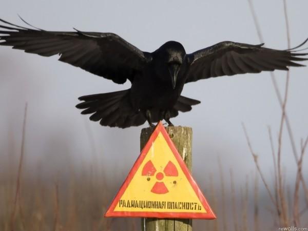 Чтим память жертв аварии на Чернобыльской АЭС