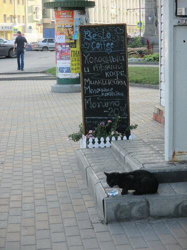 Кошка у кафе