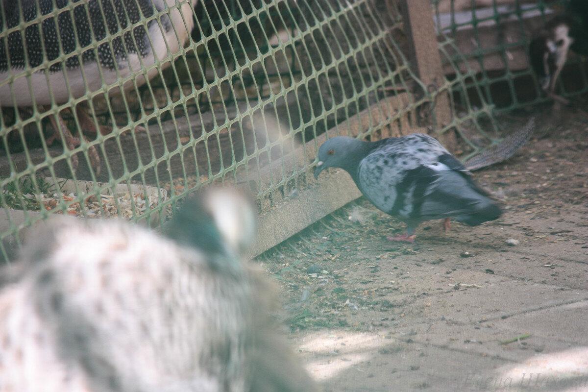Птица-12.jpg