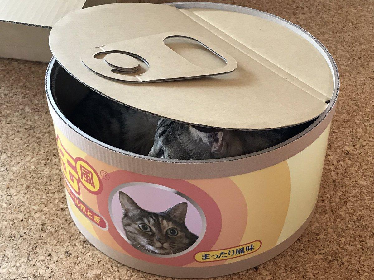 Кошачьи консервы