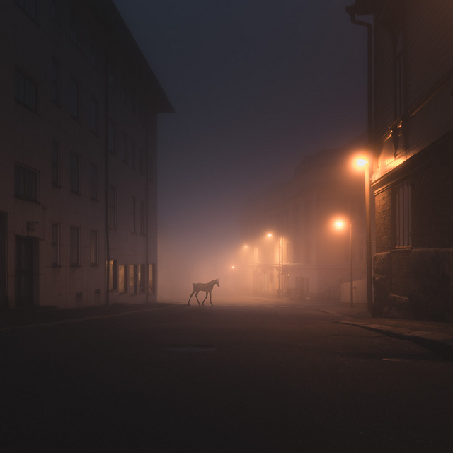 Wild Animals Stalk the Streets of a Small Town in Finland at Night (5 pics)