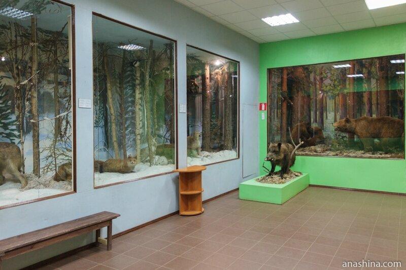 """Экспозиция Вытегорского краеведческого музея (отдел """"природа""""), Вытегра"""