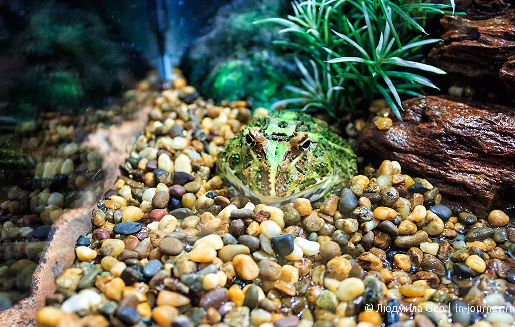 лягушка в океанариуме в бангкоке