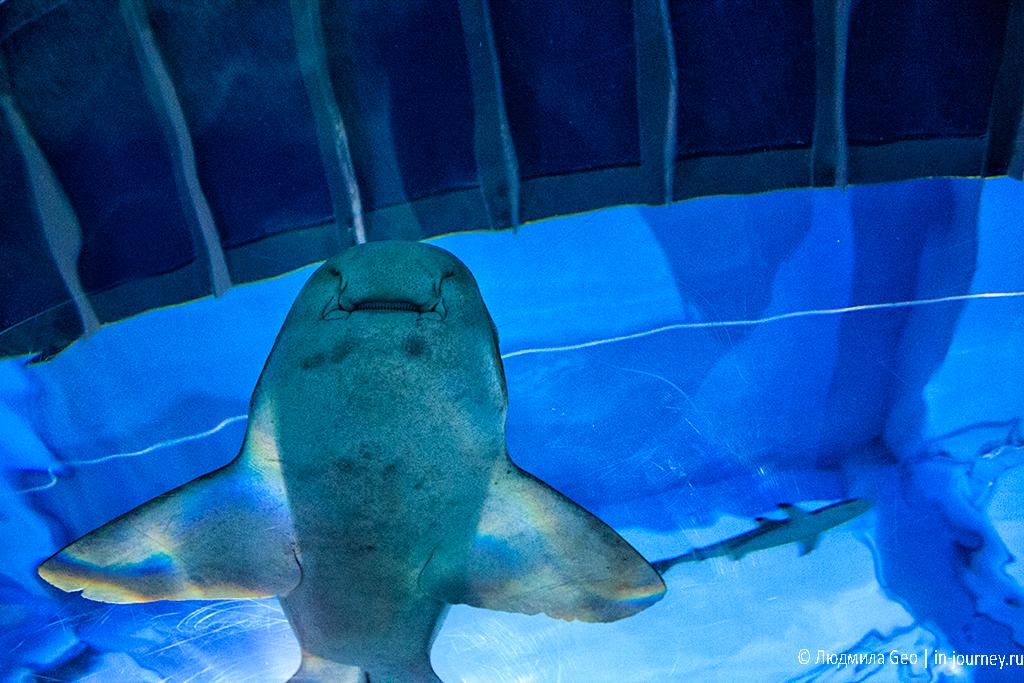 акула в океанариуме бангкока фото