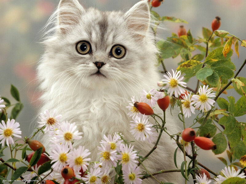 это одно смотреть анимационные картинки кошки и цветы достижении поставленной