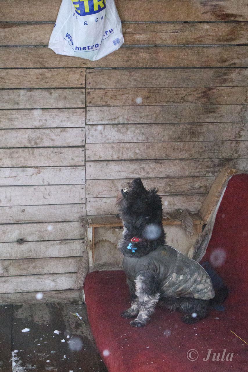 Кристофер из приюта догпорт фото