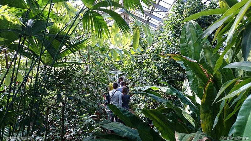 Оранжерея ботанического сада в Санкт-Петербурге
