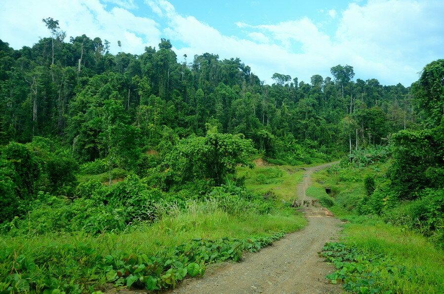 Лес Город Соронг на Западном Папуа в Индонезии Город Соронг на Западном Папуа в Индонезии 0 1b0fc4 69295b5f XXL