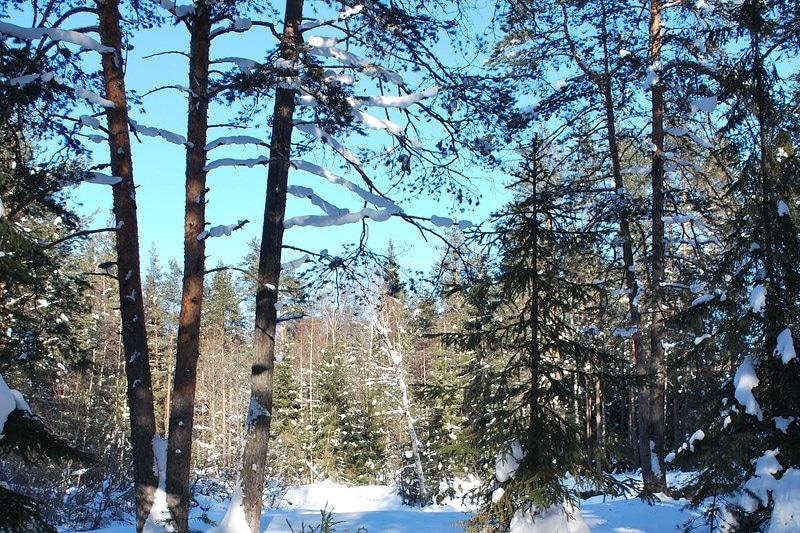Март, лес, природа