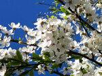 Праздник цветения...3