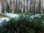 Весна а лесу