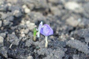 Весна идет весне дорогу - Страница 31 0_1390ec_70655d3a_M