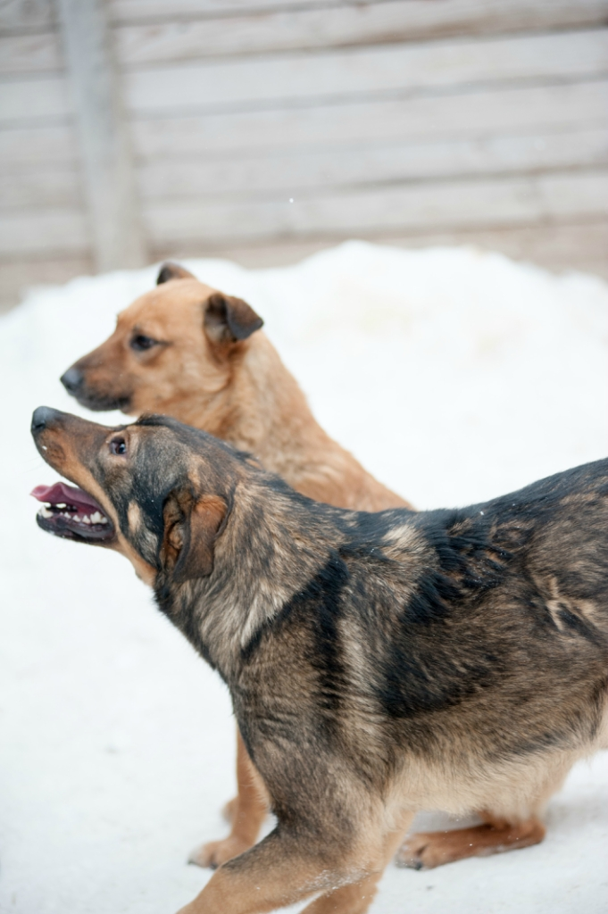 Мотя собака из догпорта