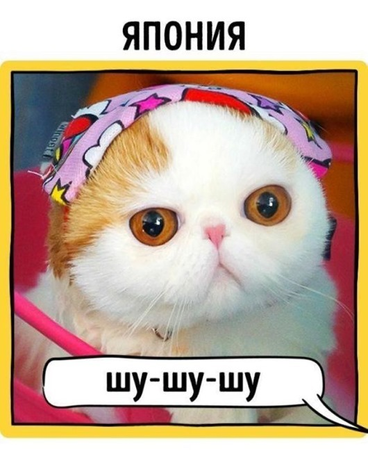 как в разных странах подзывают кошек