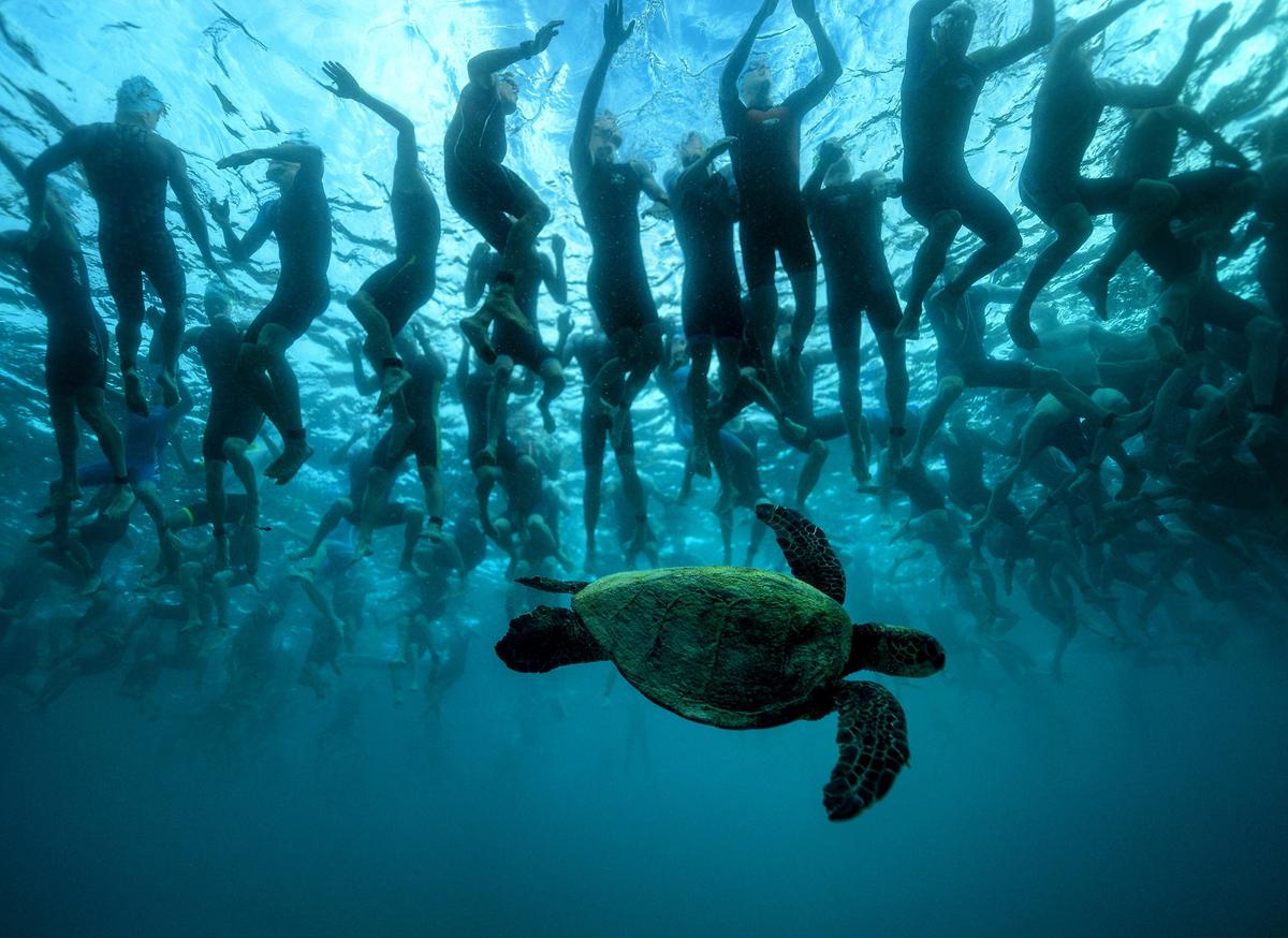 5. Зеленая морская черепаха, также известная как Хону, на Гавайях считается символом удачи и долголе