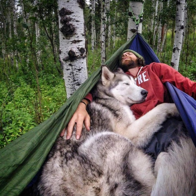 Келли Ланд, отправляясь впутешествие, всегда берет своего волкособа (смесь хаски, волка имала
