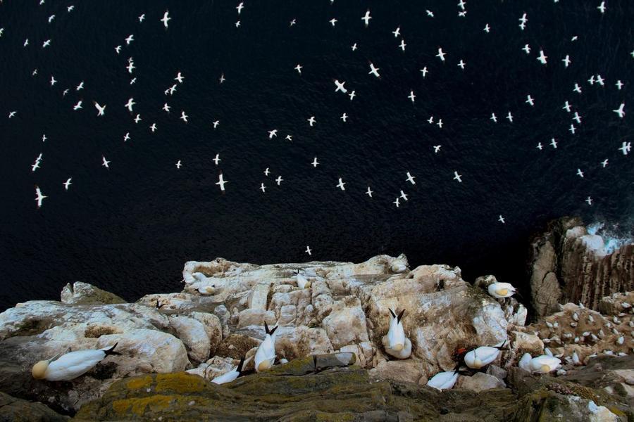 1. Абсолютный победитель фотоконкурса и победитель в категории «Среда обитания». «На краю». Северные
