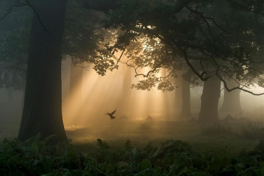 6. Категория «Дикие леса». «Порхание». Лондон, Англия. Фотограф: Chaitanya Deshpande.