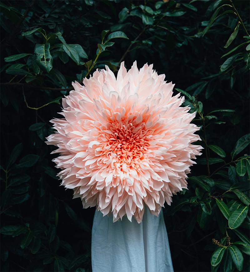Massive Paper Flower Sculptures by Tiffanie Turner