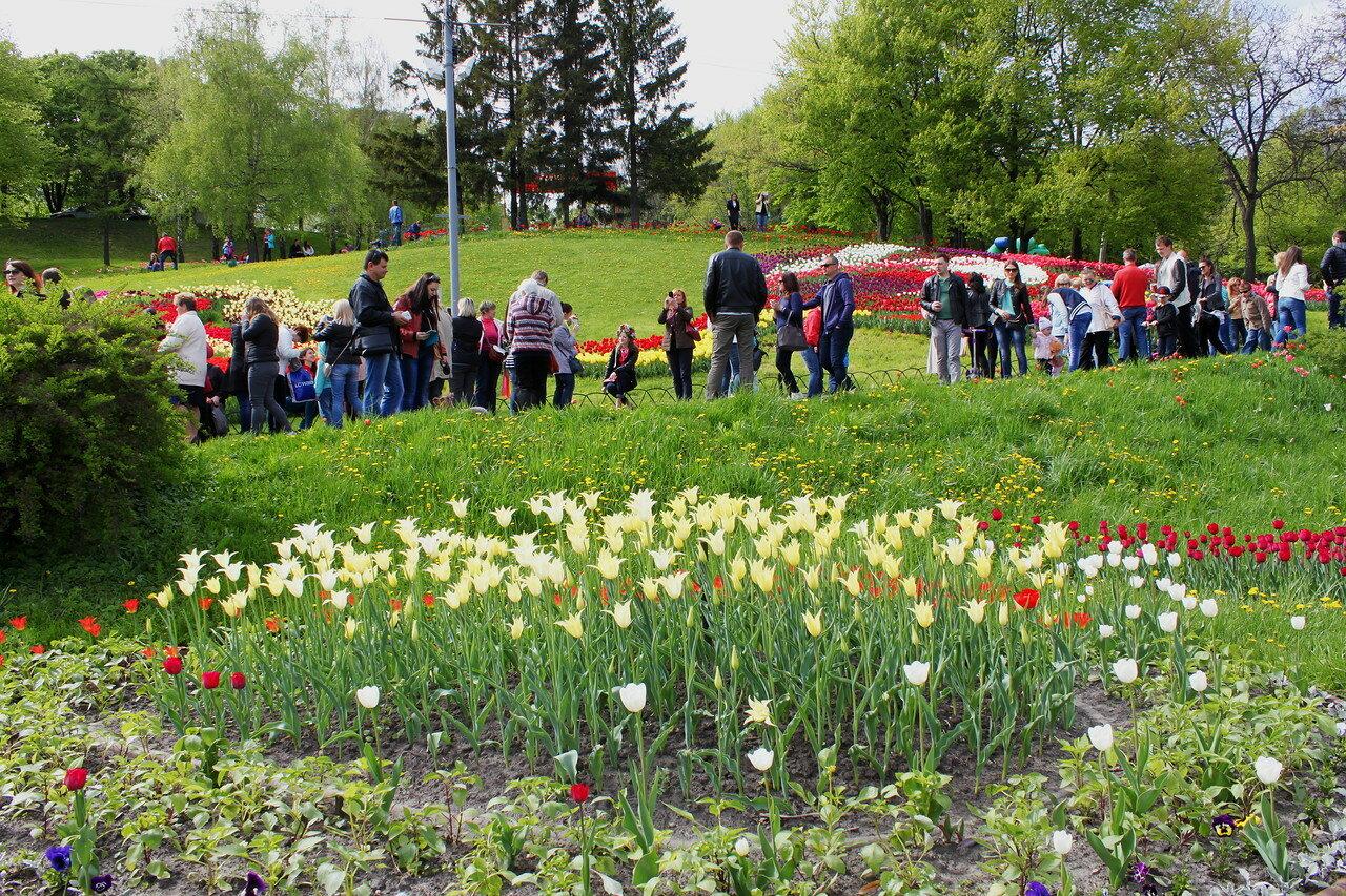 Выставка тюльпанов 2016 на Певческом поле