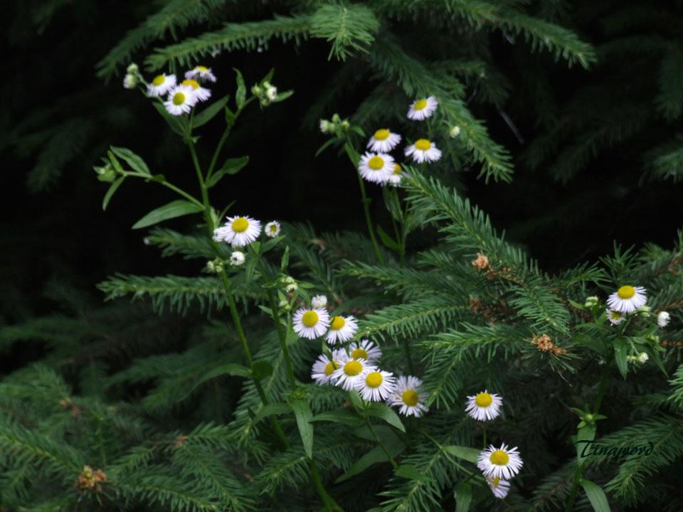 цветочки-4.jpg