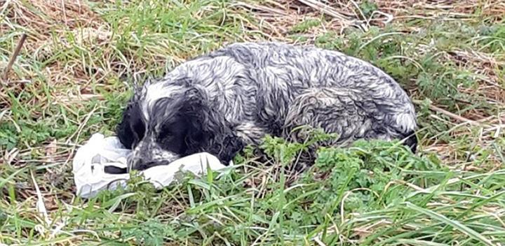 Собака караулила мешок со своими мертвыми щенками