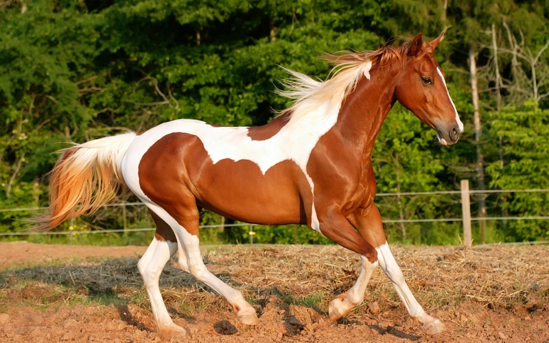 Самые известные породы лошадей