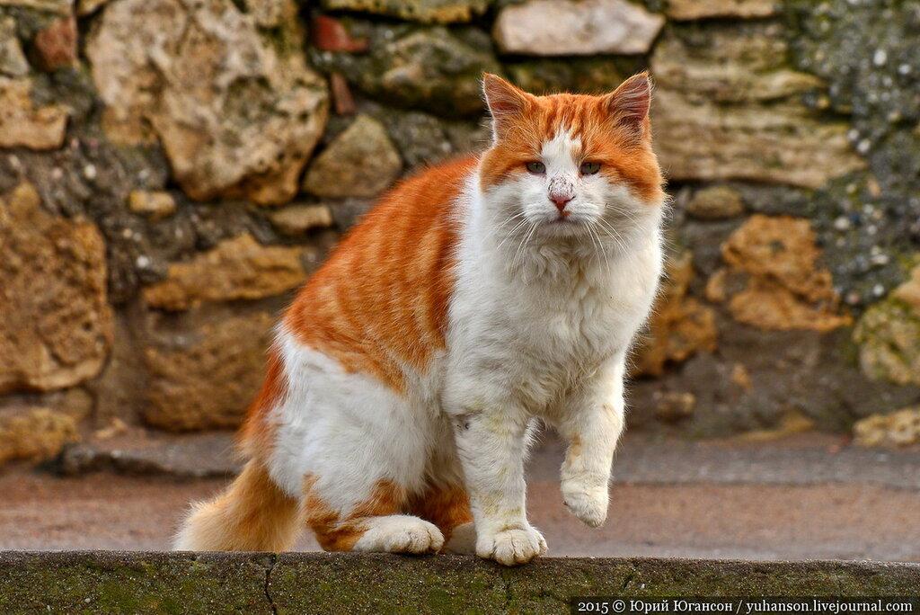 на каких котов нет аллергии у людей