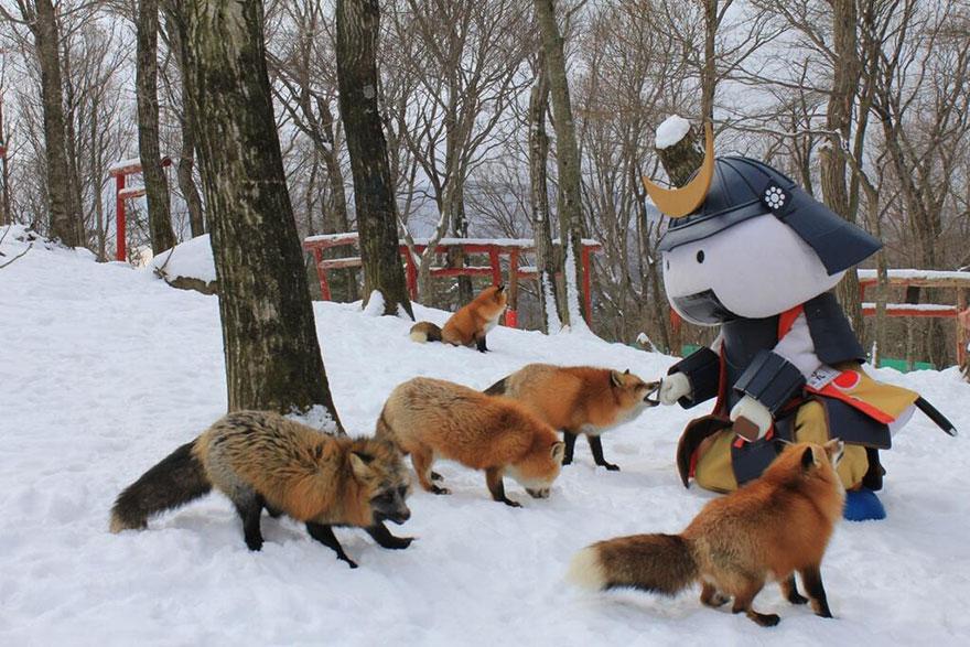 5. По существу, лисья деревня представляет собой мини-зоопарк со свободным выгулом для животных. Пос