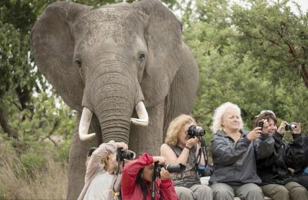 Животные, которые сделали эти снимки эффектными