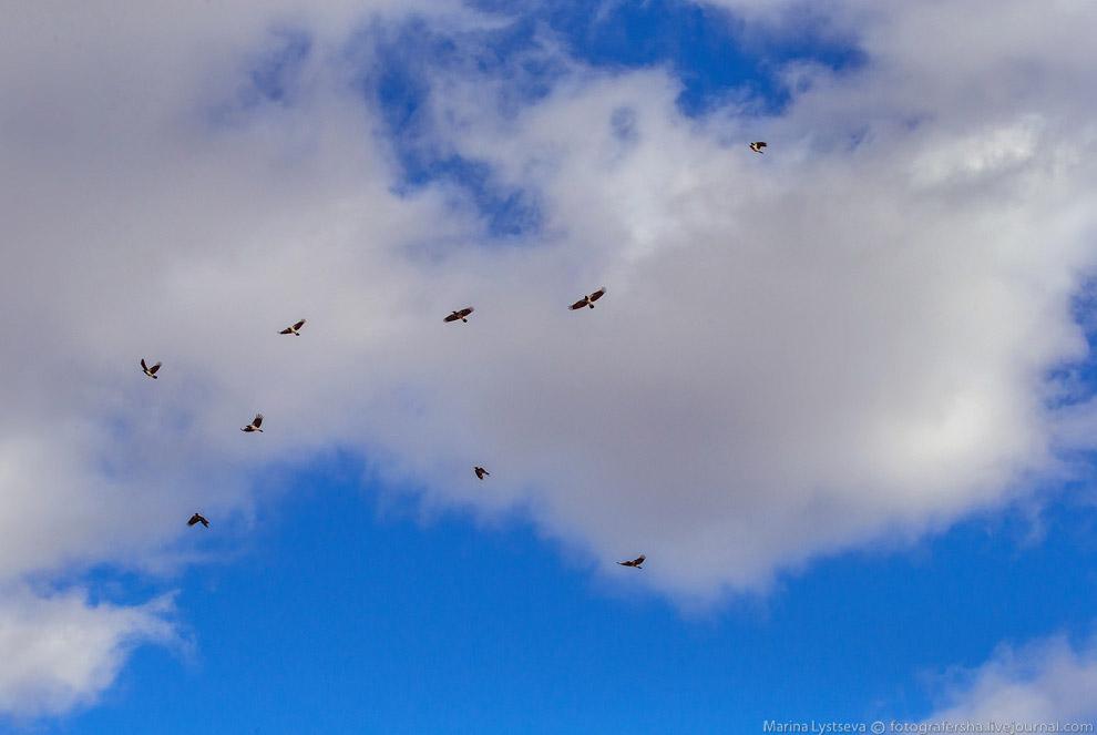 4. Птицы боятся резких звуков, хлопков, выстрелов и представляющих для них потенциальную угрозу