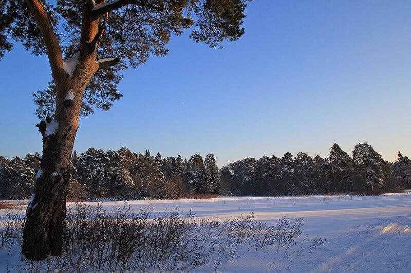 Лыжня, снег и сосны в закатных лучах в Заречном парке города Кирова