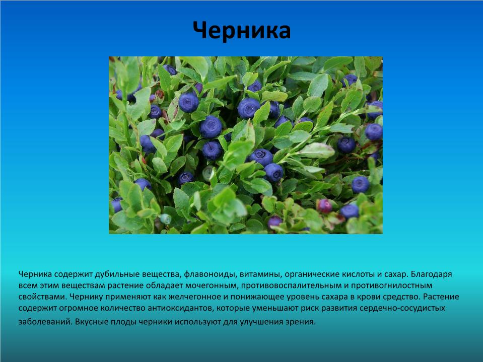 Доклад лекарственные и съедобные растения 2939