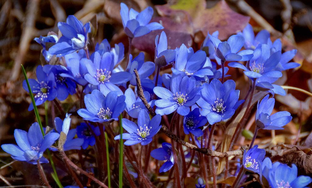 Месяц март, сады пусты,ну какие тут цветы...?