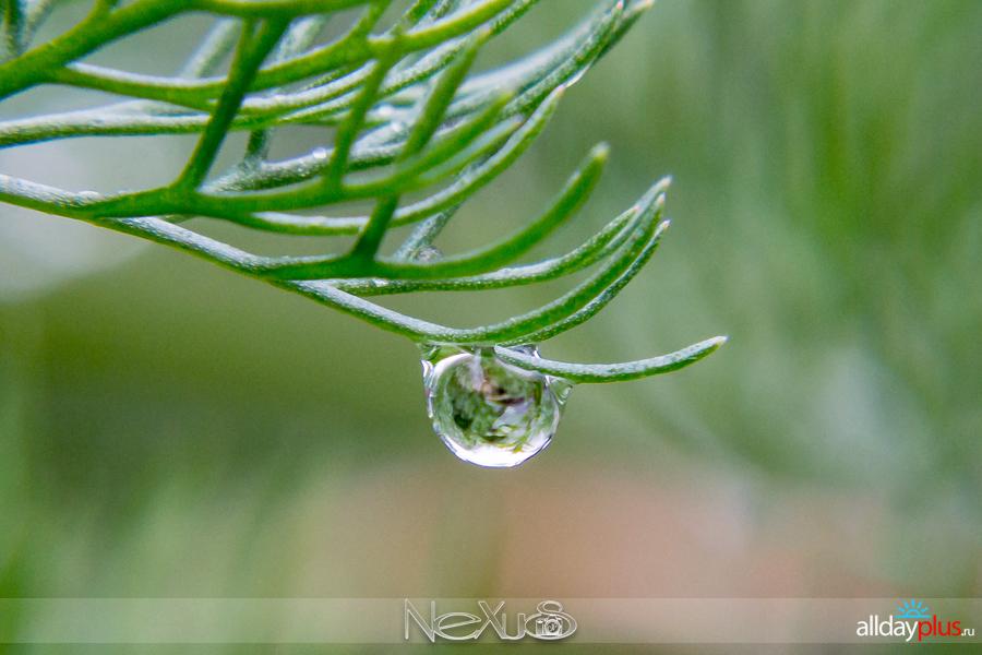 У природы нет плохой погоды, выпуск # 19   Очарование упавших капель.