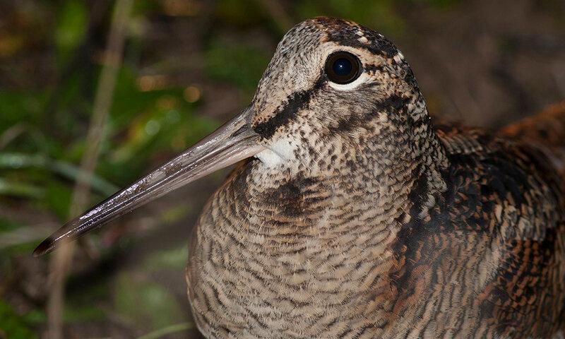 Идеальная фотография птица надзора