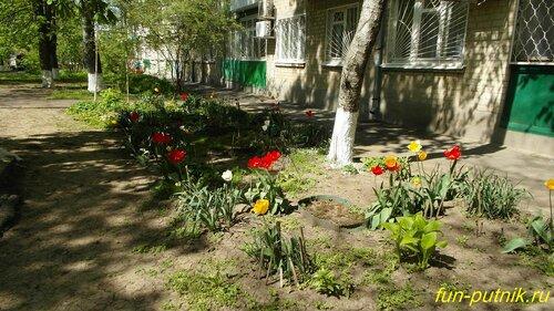 Весенний Ростов — тюльпаны в городе