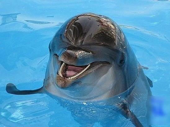 Дельфинчик.